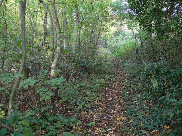 Path through the St Mary's Allotments
