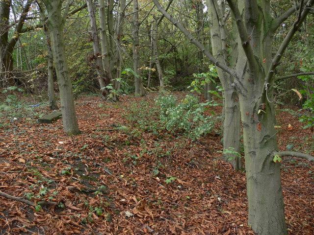Small woodland at the Raw Dykes