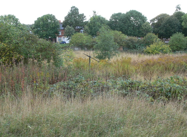 The derelict and overgrown St Mary's Allotments