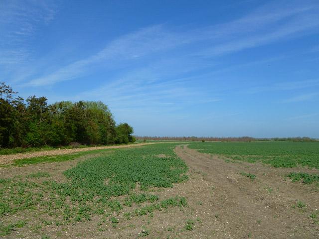 Farmland, West Hanney