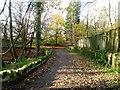NS5576 : Mugdock Country Park by Robert Murray