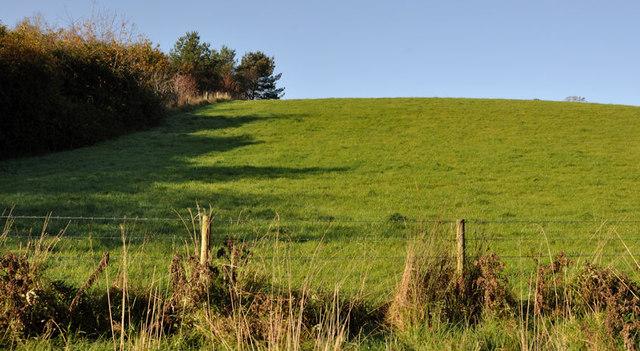 Wood and field, Helen's Bay/Crawfordsburn