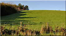 J4681 : Wood and field, Helen's Bay/Crawfordsburn by Albert Bridge