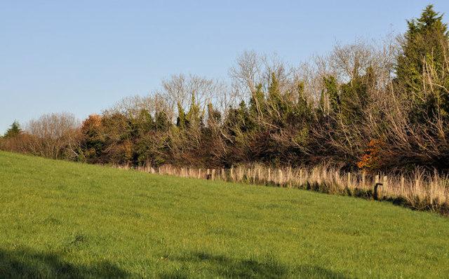 Lane and trees, Helen's Bay/Crawfordsburn