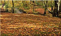 J4681 : Autumn leaves, Crawfordsburn Country Park (4) by Albert Bridge