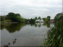 SJ7744 : Madeley Pool by Alexander P Kapp