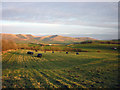 SD6096 : Silage field and the Howgills by Karl and Ali