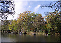SO8992 : Angling jetties in Baggeridge Country Park near Wombourne by Roger  Kidd