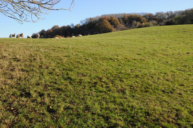 Farmland near Highwood by Philip Halling