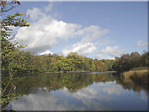 SO8991 : Island Pool in Baggeridge Country Park near Wombourne, Staffordshire by Roger  Kidd