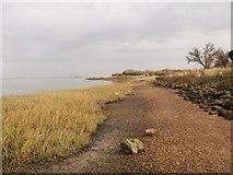 TQ8068 : Marsh Reeds beside Horrid Hill Causeway by David Anstiss