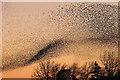 NY3168 : A murmuration of starlings at Gretna by Walter Baxter
