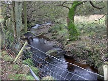 SE7297 : Northdale Beck by Pauline E