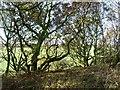 SE3915 : Wooded western side of former railway embankment by Christine Johnstone