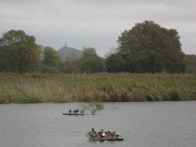 Duck islands, Walton Heath