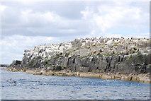 NU2135 : Cliffs of Inner Farne by N Chadwick