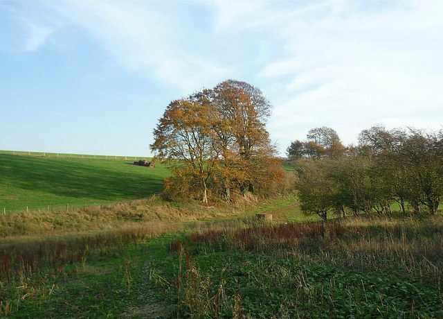 Field margins and banks