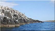 NU2135 : Cliffs, Inner Farne by N Chadwick