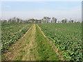 TL3662 : Fields near Rectory Farm, Dry Drayton by David Purchase