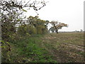 SJ6963 : Field-Woodland boundary by Dr Duncan Pepper