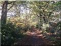 TQ3461 : Track beside Selsdon Park Golf Course by David Anstiss