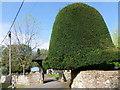 SU6431 : Topiary, Ropley by Maigheach-gheal