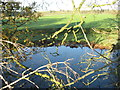 SJ6973 : Pond & sheep grazing beside A556 layby by Dr Duncan Pepper