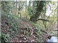 SJ6661 : Footpath in Sandicroft Wood by Dr Duncan Pepper