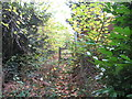 SJ6661 : Footpath from Sandicroft Wood to the Over Road by Dr Duncan Pepper