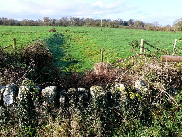 Old Watermeadows, Winterborne Herringston