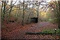 SU9585 : In Burnham Beeches by Graham Horn