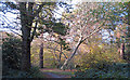 TQ4092 : Path in Knighton Wood by Roger Jones