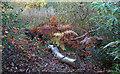 TQ4093 : Forest floor by Roger Jones