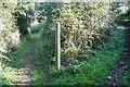 SW6239 : Bridleways everywhere by Graham Horn