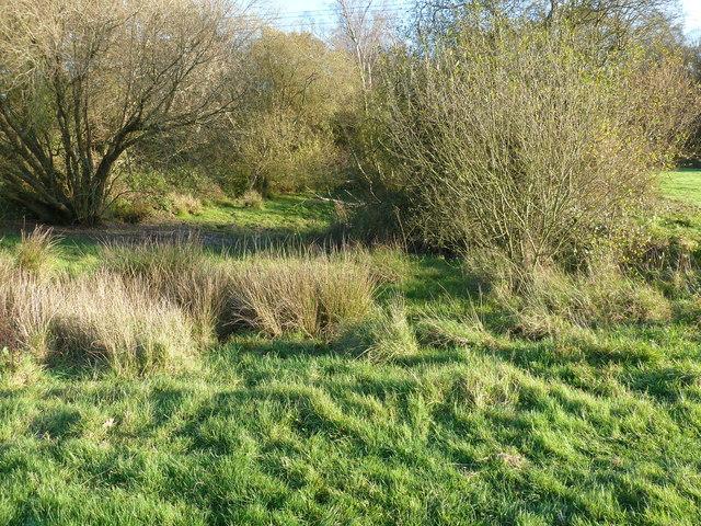 Dried up pond near Nettlesworth Wood