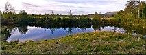 NZ5906 : Pond in Forestry near Bank Foot by Paul Buckingham