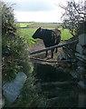 SW6041 : Cow at Menadarva by Graham Horn