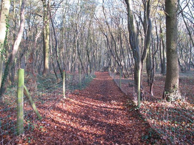Path in Scotts Wood