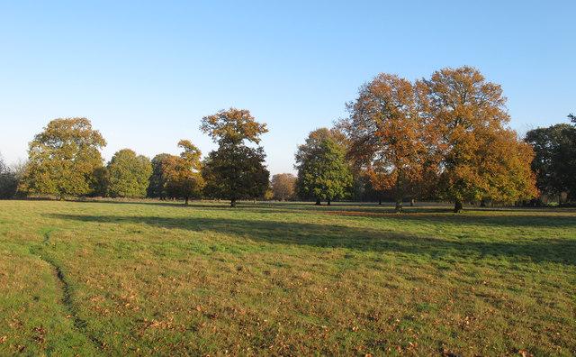 Landscaped oaks