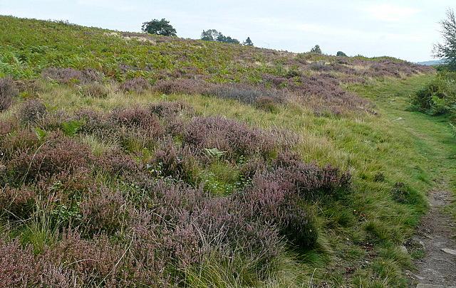 Danby Low Moor