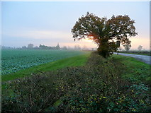 SO7729 : Dawn over Staunton 2 by Jonathan Billinger