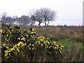 H9894 : Marshy ground, Lough Beg by Kenneth  Allen