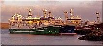 HU4642 : Pelagic Trawlers, Holmsgarth Pier, Lerwick by Robert W Watt