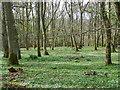 NO0946 : Woodland floor, Croft Wood by Maigheach-gheal