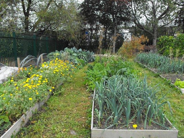 The vegetable plot