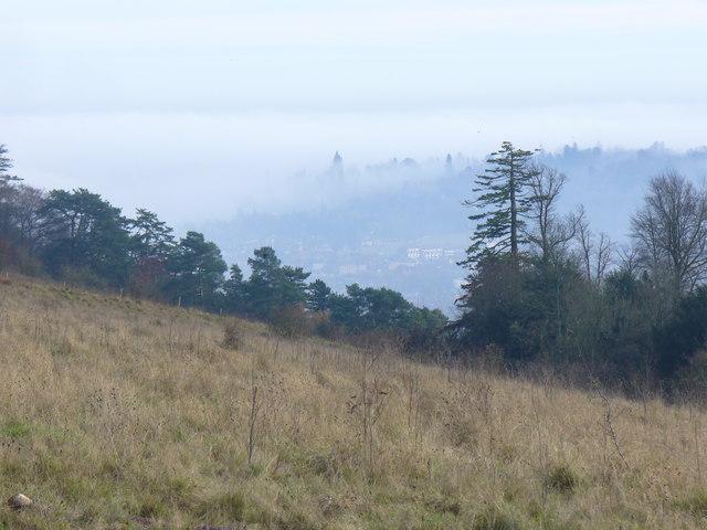 Denbies Hillside, Ranmore