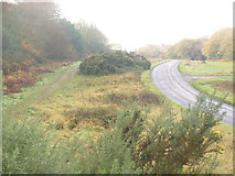 TQ1350 : Ranmore Common Road by Colin Smith