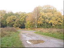 TQ1350 : Ranmore Common by Colin Smith