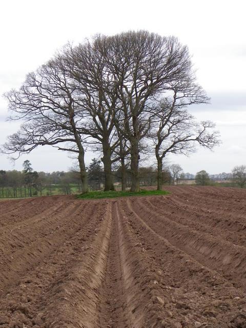 Farmland, Kirkton of Collace