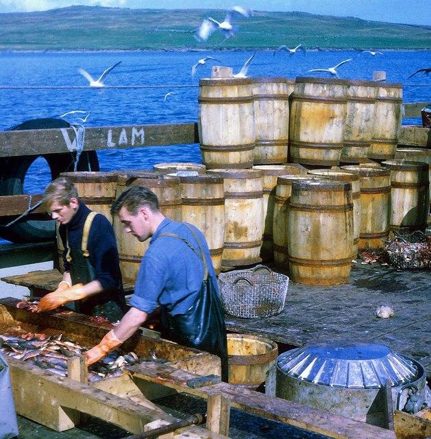 Norwegian klondykers curing herring in Bressay Sound